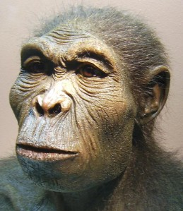 Reconstruction of a Homo habilis head, from Westfälisches Museum für Archäologie, Herne