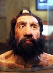 640px-Homo_neanderthalensis_adult_male_-_head_model_-_Smithsonian_Museum_of_Natural_History_-_2012-05-17