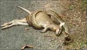 python_682_643179a