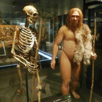 Skeleton_and_restoration_model_of_Neanderthal_La_Ferrassie_1