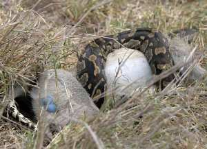 python_knp-1474b