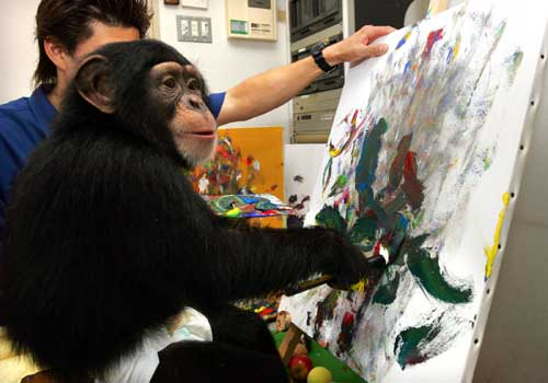 Asuka, three-year-old female chimpanzee, draws an oil painting at a studio at Izu Shaboten Park in Ito