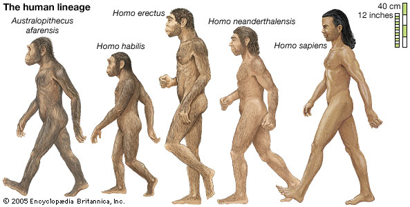Image result for image of a hominid