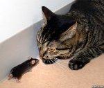 CatMouse1R_468x399