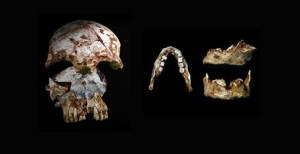 Researchers found an ancient human skull, left, with modern characteristics, and a human jaw, right, with modern and archaic traits, in the same cave in northern Laos. Both artifacts date to 46,000 to 63,000 years ago. Credit: Fabrice Demeter