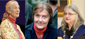 Jane Goodall, Dian Fossey, and Birutė Galdikas