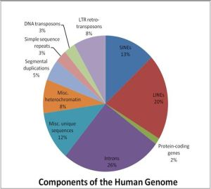 666px-Components_of_the_Human_Genome1