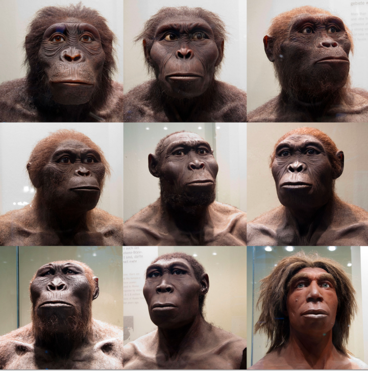 Photos taken and arranged by Sebastian Niedlich at the Berlin museum of Natural History