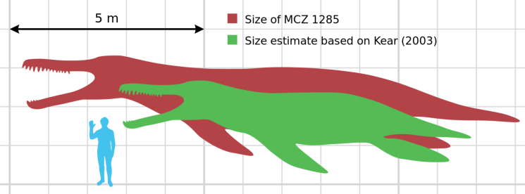 Scale diagram of Kronosaurus queenslandicus from Wiki Creative Commons