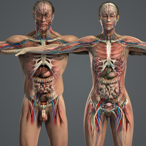 male_and_female_anatomy_complete_01eb18be85-a027-4efc-847c-c1366715e7e6large