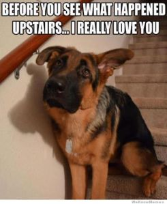 before-you-see-what-happens-upstair