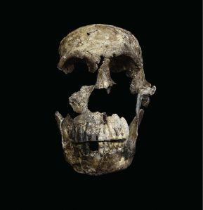 skull-neo