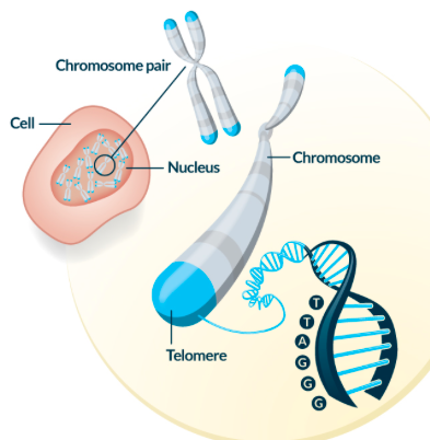 Healthcare Access and Stress: The Truth is in the Telomeres