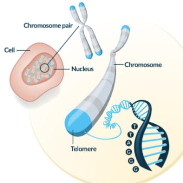 Anatomy and Physiology – The Human Evolution Blog