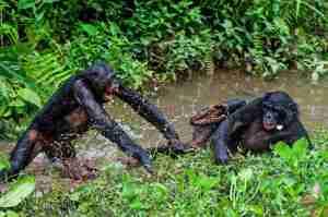 jerk-bonobos-1_custom-1f3adce37296599c69d499fc531b4422f861a8fa-s1100-c15