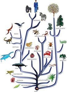 amoeba-evolution-theory-amoeba-to-human-evolution-common-1636043